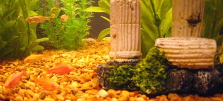Photo of my fish tank